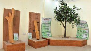 Karnataka's Mysuru to Get India's First Sandalwood Museum_50.1