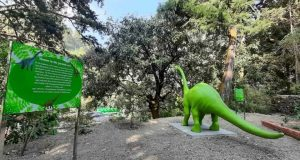 India's first 'Moss Garden' comes up in Nainital district_50.1