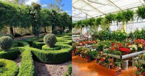 Uttarakhand sets up Botanical Garden to conserve species of Shivalik range_50.1