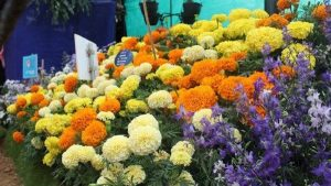 Karnataka to set up a Flower Processing Centre_50.1