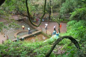 Maharashtra: Amboli named as biodiversity heritage site_50.1