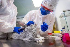 Russia registers world's 1st Covid vaccine Carnivac-Cov for animals_50.1
