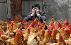 China reports first human case of H10N3 bird flu_50.1