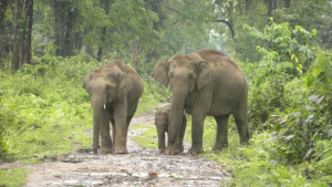 Assam gets its seventh national park with Dehing Patkai_50.1