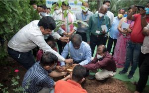 World's first-ever genetically modified rubber planted in Assam_50.1