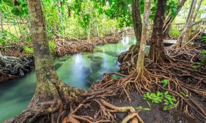 International Day for the Conservation of the Mangrove Ecosystem_50.1