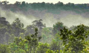 Chhattisgarh becomes 1st state to recognise Forest Resource Rights in Urban Region_50.1