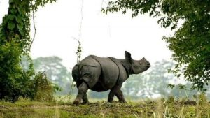 Kaziranga becomes India's first national park with satellite phones_50.1