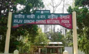 Assam cabinet decides to remove Rajiv Gandhi's name from Orang national park_50.1