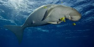 India's first dugong conservation reserve to come up in Tamil Nadu_50.1