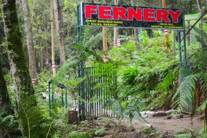 India's largest open air fernery opened in Uttarakhand_50.1
